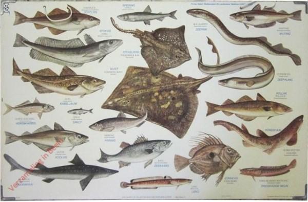1 - Zeevissen